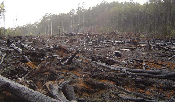 Первое заседание межведомственной рабочей группы по противодействию экологическим преступлениям: Фильчаков анонсировал экопаспорта