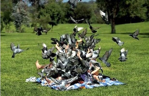 Донбасс и голуби: Кормить или не кормить?