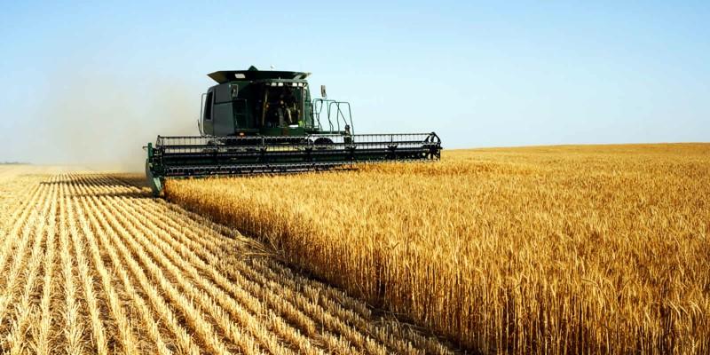 5 причин начать свой агробизнес