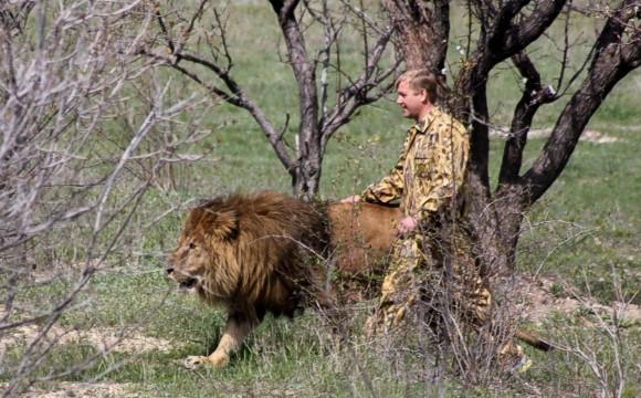 Сафари-парк в Крыму открыл сезон: львов выпустили на свободу
