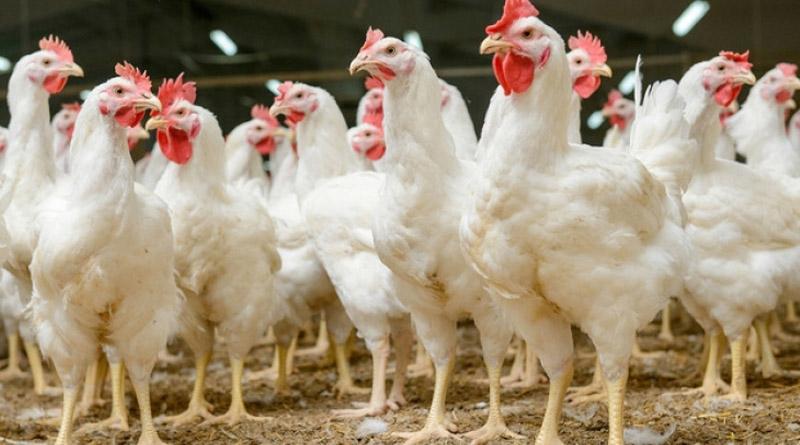 Еврокомиссия хочет разрешить увеличить импорт курятины из Украины