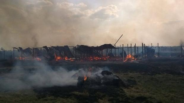 Под Киевом сожгли приют для животных: 70 собак сгорели заживо