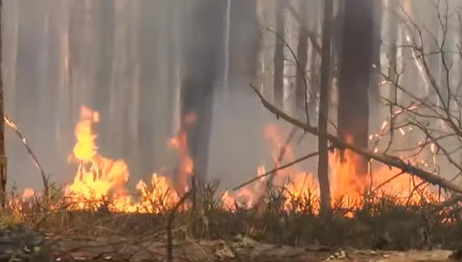 Пожар в Чернобыльской зоне: огонь подбирается к ЧАЭС