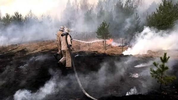 Германия передаст Украине оборудование для тушения пожаров вокруг ЧАЭС
