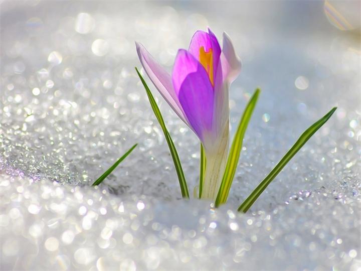 Картинки на k зима цветы на снегу